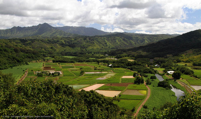 Taro fields in Hanalei Valley