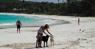 Beach dogs enjoying some attention from a tourist