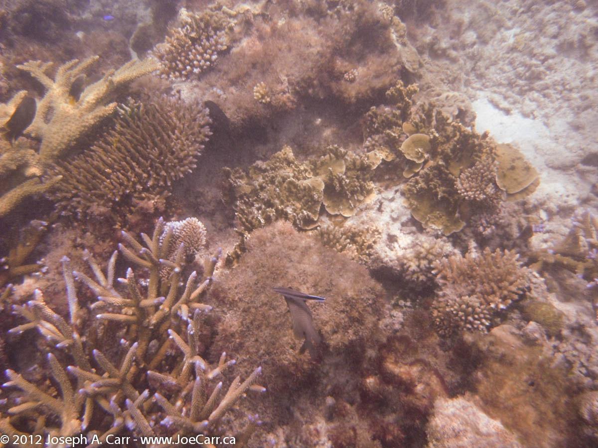 Coral & fish