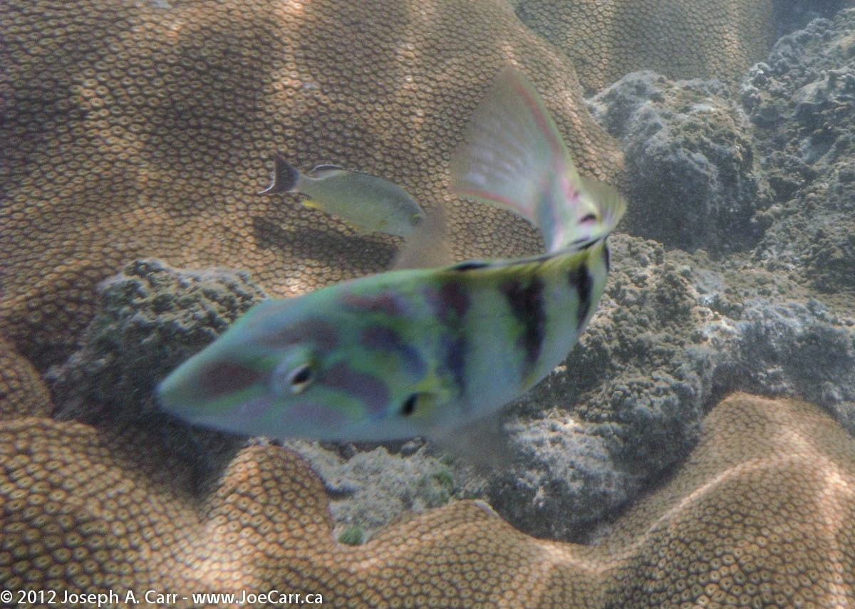 Multi-coloured striped fish and coral
