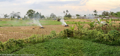 Burning off the rice field after harvest