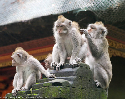 Monkeys perched on a temple column