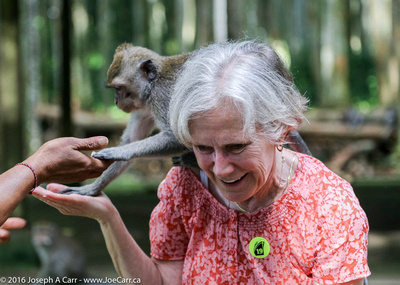 Monkey climbing on a a woman