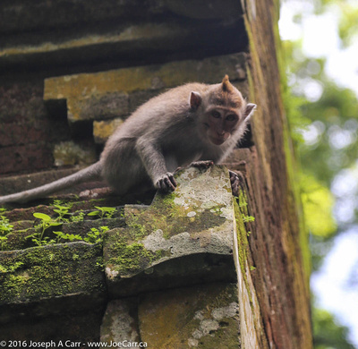 Monkey perched on a temple column