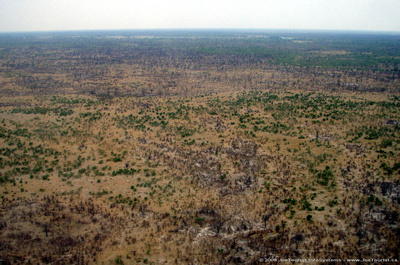 Aerial view of the Okavango Delta  - dry area near Linyanti Camp