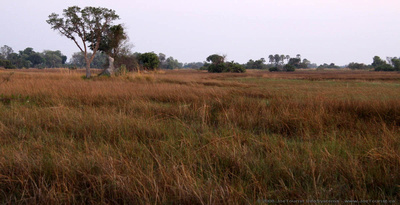 Morning light over Okavango Delta