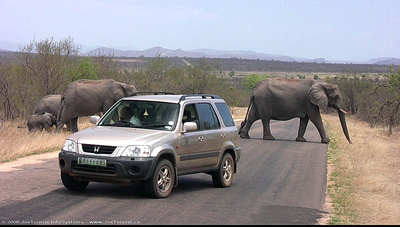 Elephants crossing the road in front of us