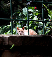 Cat on the wall by the Sunken Garden