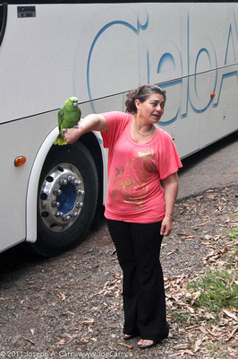 Parrot perched on a woman's arm