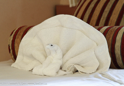 A turkey towel art