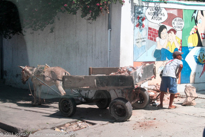 Man working with his mule-drawn cart