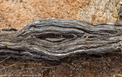 Nearly-petrified wood