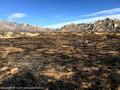 Burnt area