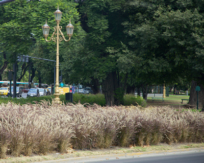 Ornamental lamp posts with pampas grass