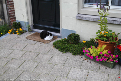 A black and white cat on the door mat