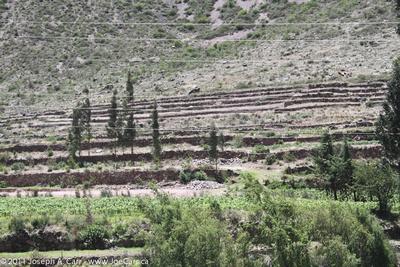 Inca terraces along the river