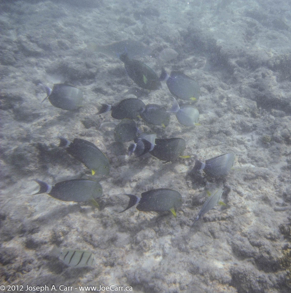 School of big fish in the coral shallows