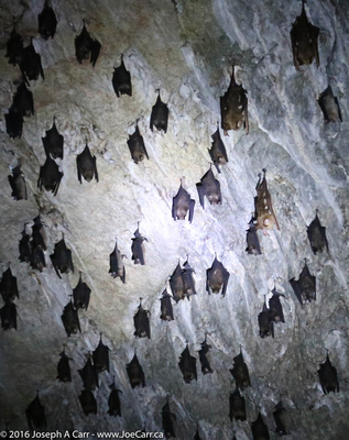Bats sleeping in their cave