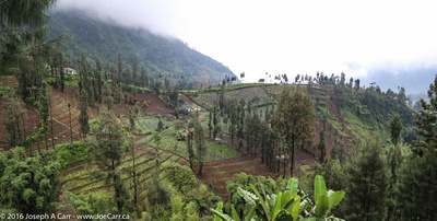 Crops being cultivated in terraces on the mountain slopes
