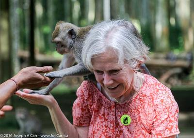 Monkey climbing on a a woman