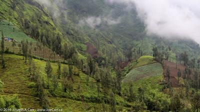 Mist-shrouded mountain slope