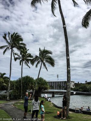 Palm tree with tsunami flood level markings