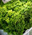 Fern greens