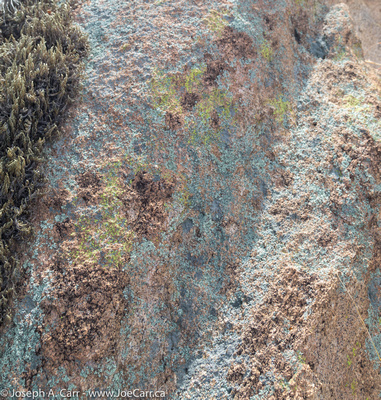 Multi-coloured lichen on a boulder