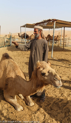 Camel owner posing with his animals