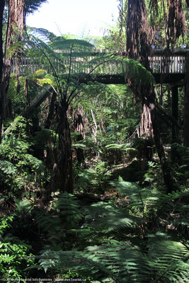 Elevated walkway through native bush