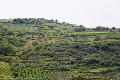 Vineyards on the hillsides