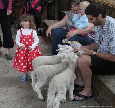 Kids & lambs being fed